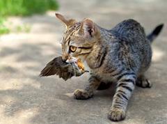 home_catsindoors2