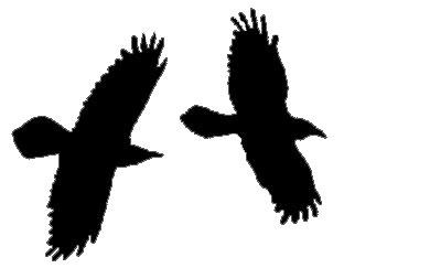 Southwest New Mexico Audubon Society